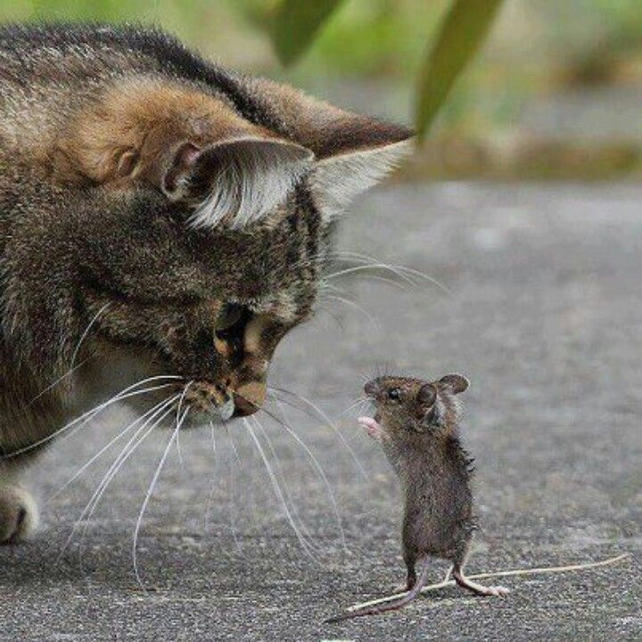 """You are very lucky mr. mouse that I am not hungry today."""