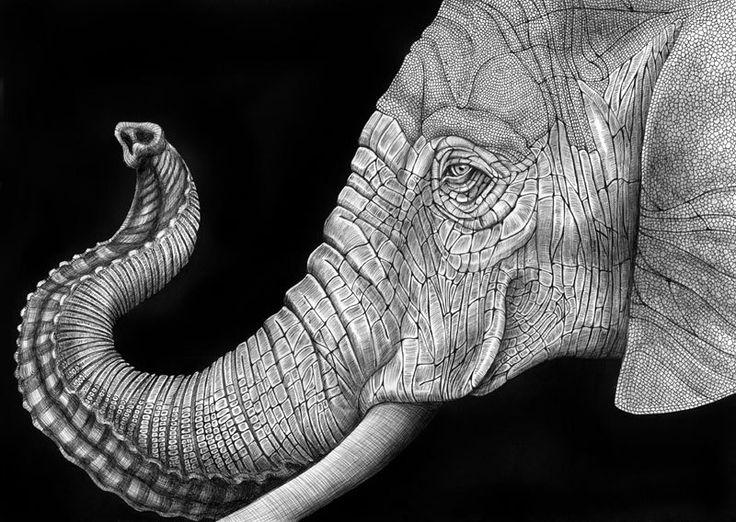 """""""In elke tekening probeer ik de unieke kwaliteit van elk afzonderlijk dier te vangen. Ik heb ook altijd genoten van de spectaculaire natuur die tekening in zwart-wit aanbiedingen. Al mijn werk wordt gedaan in pen en inkt. Dit medium daagt mij om niet terug te kijken. Geen wissen of overdoen betekent een pure en ware eindresultaat. """""""
