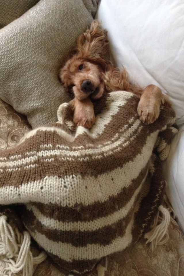 Ready for a little nap...