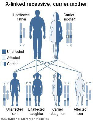 G6PD genetics. G6PD is an X linked disorder. Carriers can experience symptoms through a process of lionization.