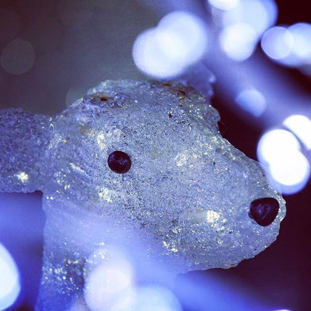 Instagram【oreoreo0】さんの写真をピンしています。 《大きな黒いその瞳で、何が見つめているんだろ…でも、なんだか少し寂しそうだね… . . . 今日はめちゃ寒かったですね❄️久々にスタバってます☕️定番の#ダブルトールラテ . 週末雪なら京都に行こうかな☃️ . . . #ファイダー越しの私の世界 #夜景 #夜景ら部 #カメラ好きの人と繋がりたい #写真好きな人と繋がりたい #兵庫 #hyogo #神戸 #三田 #神戸フルーツフラワーパーク #神戸イルミナージュ #フルーツフラワーパーク #イルミネーション #イルミ#kobe #canon #eos #一眼レフ #鹿 #玉ボケ #japan_night_view #nightview #icu_nightlife #nightphotography #illumination》