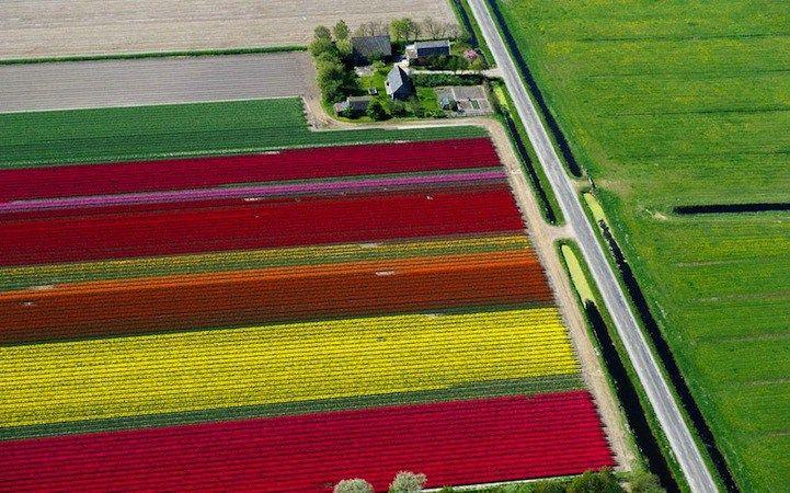 O cultivo de tulipas é algo tradicional na Holanda. Elas protagonizaram inclusive a primeira bolha especulativa a que se tem notícia, a febre da tulipa: Pe