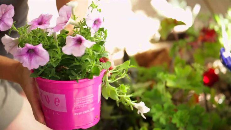 52 Best Images About Yard Garden Videos On Pinterest