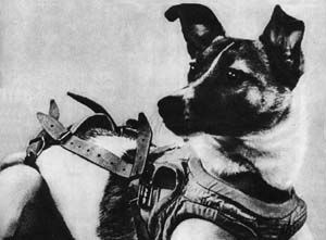 Laika #space #science #dogs