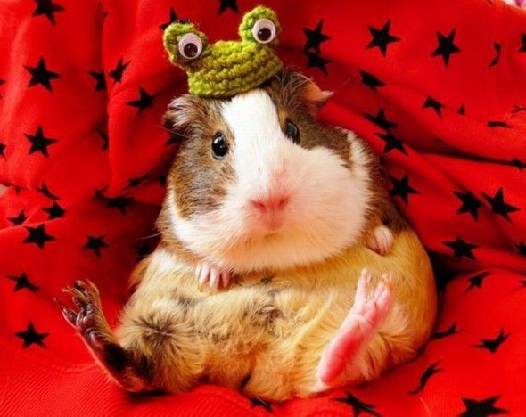 Knitting Small Animals : Best knitting animals images on pinterest knitted