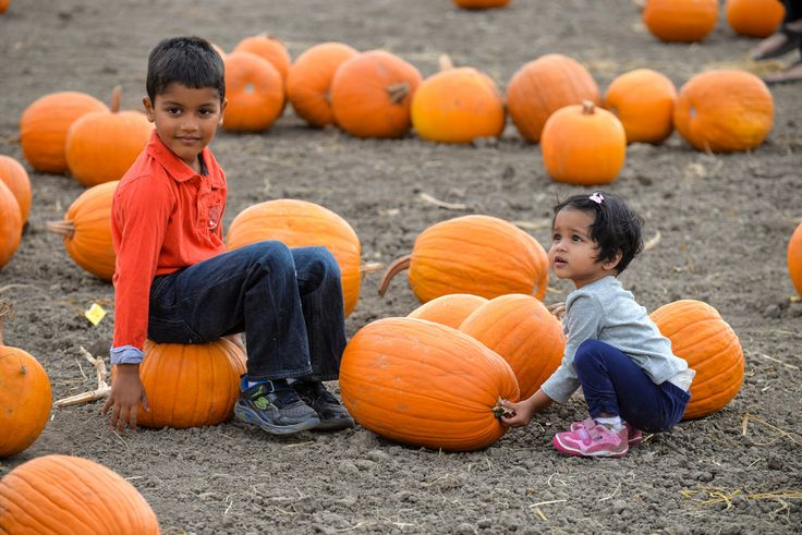"""takasphoto.com posted a photo:  Halloween time was coming close, and we decided to check out the pumpkin patch located in Fremont, south from where we live.  The pumpkin patch was full of people - families smiling and picking the pumpkins they want to take home. Lots of orange colors in the field, fall colors are here in California too!  If you like my photos, please """"follow"""" or """"like my pages below!  