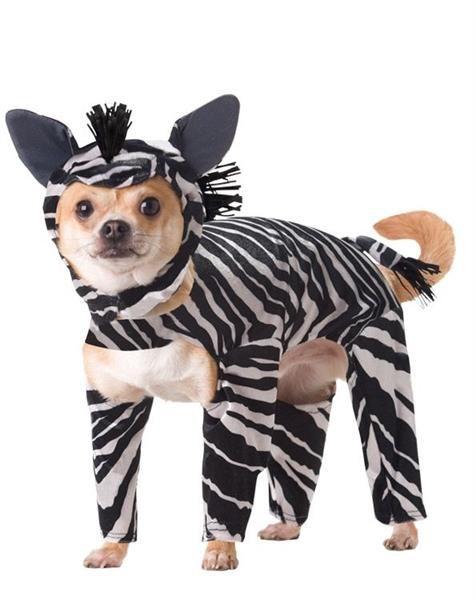 Куртка для собаки зебра