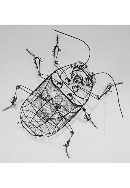 Could also use colored string once you have the basic structure with wire. entymology bug anatomy wire art picture of a beetle
