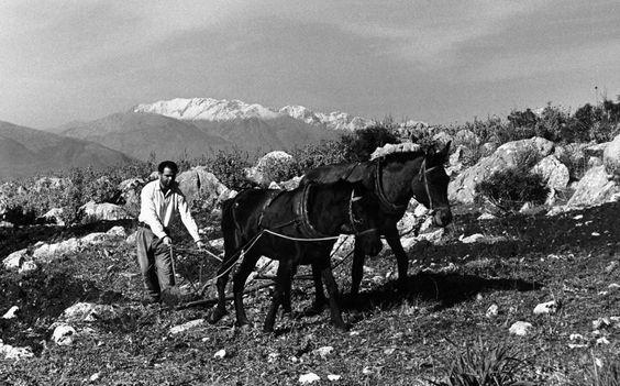 James-Burke  Ορεινα-Θήβας-Λειβαδιάς-1959