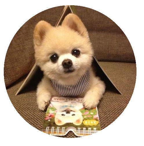 Pomeranian Teddy Bear Dog Snap 20mm-Simple Eleganace Jewelry