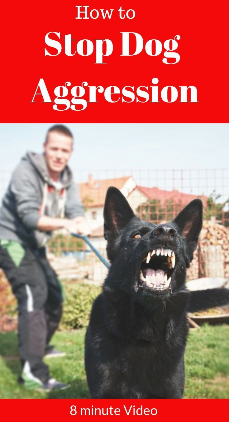 How To Stop Dog Aggression Dog Aggression Training Aggressive