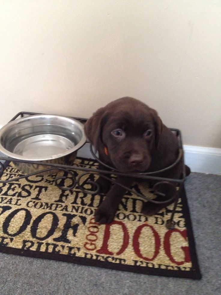 Can i get some food please dog bowls canning bowl