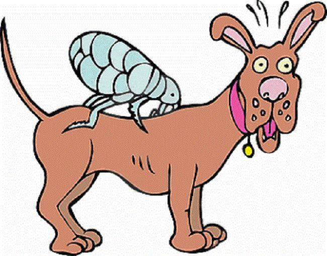 As pulgas são verdadeiras vilãs para os bichinhos de estimação Além da coceira excessiva e pele irritada, essa praga pode causar problemas ainda mais graves, como verme, anemia, estresse e transmissão de vírus. A saliva das pulgas provoca uma forte reação alérgica.