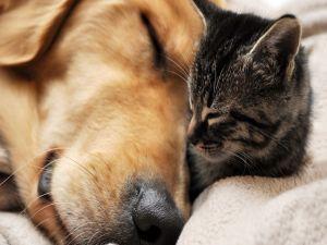 Gato y perro durmiendo juntos una siesta