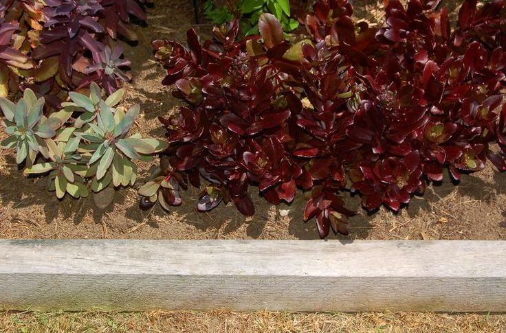 113 Best Images About Garden Edging Amp Designs On Pinterest