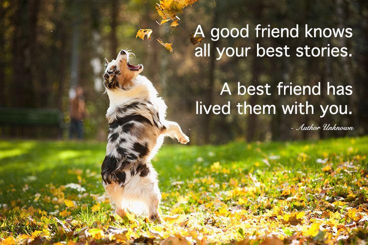 Keep your best friend close. #PetcoPlaylist @petco