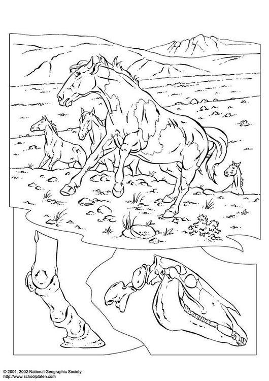 Disegno da colorare cavalli selvatici