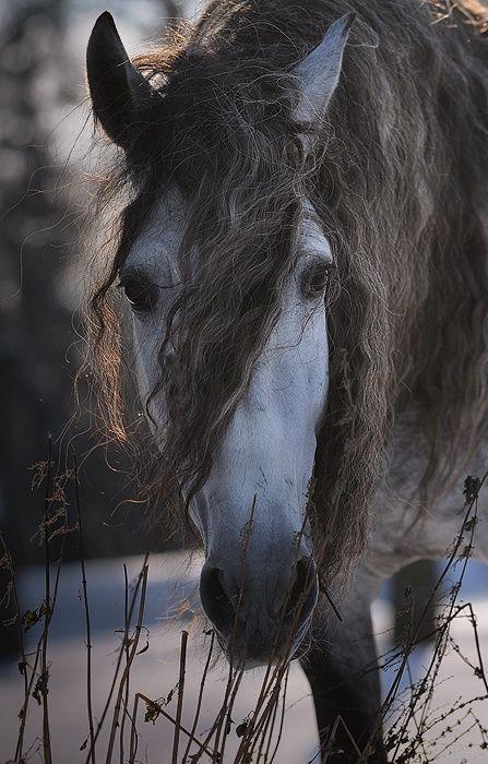 Gorgeous Grey StyleMyRide.net @SMRequestrian #stylemyride #horselove