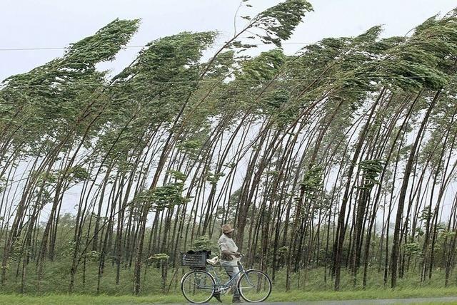 silny wiatr - Szukaj w Google