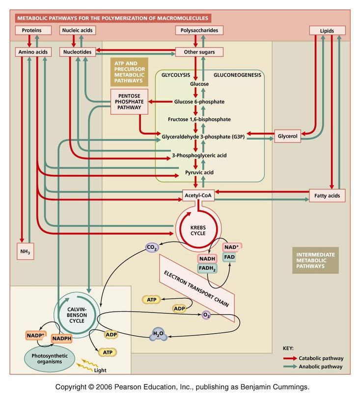 Is there any order to biochemistry?