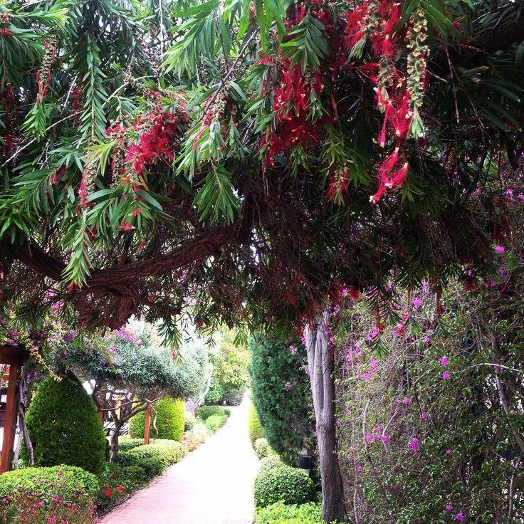 Looking back can be inspiring; have a great day ������ geriye dönüp bakmak ilham verici olabiliyor; güzel bir gün dileklerimle ���������� #goodmorning #inspiration #nature #garden #beautiful #vegetation #flowers #outdoor #doğa #sabah #bahçe #goodness #hayat #güzel #turkey http://turkrazzi.com/ipost/1520956496790265626/?code=BUbheAeAZ8a
