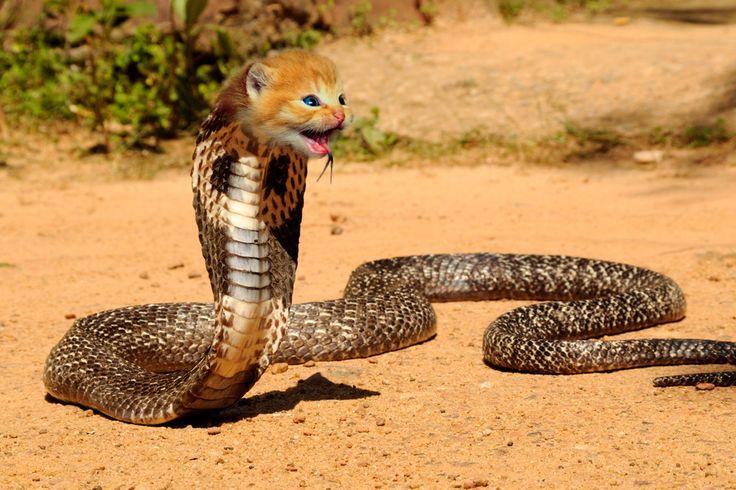 cat vs snake - Tìm với Google