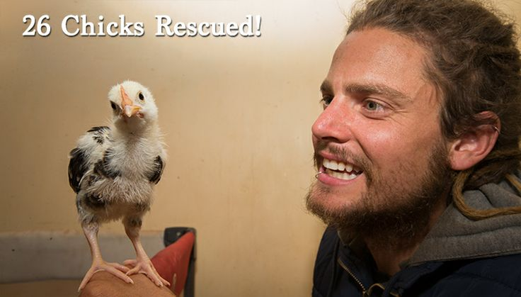 26 Chicks Rescued