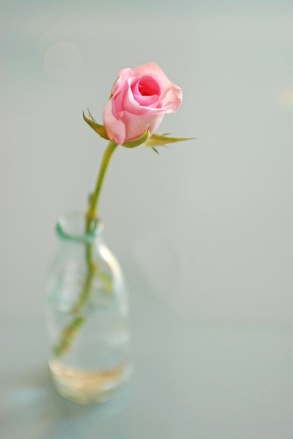 glass and a single pink rose