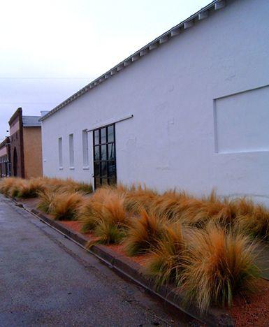 loving grasses for the garden
