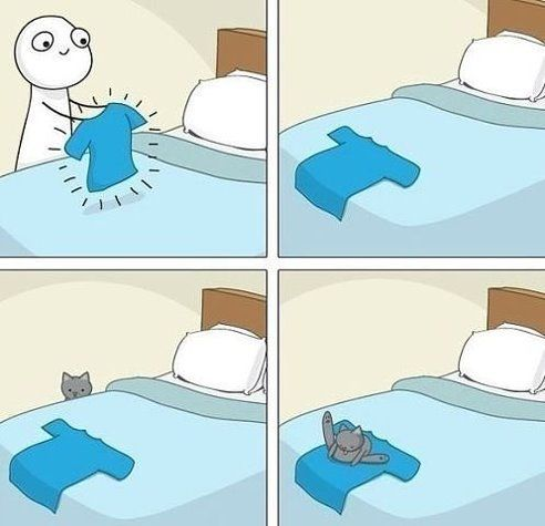опять о кошках