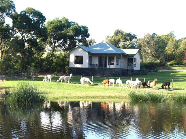 Raynella Alpaca Farm B and B | Yarra Valley, VIC | Accommodation