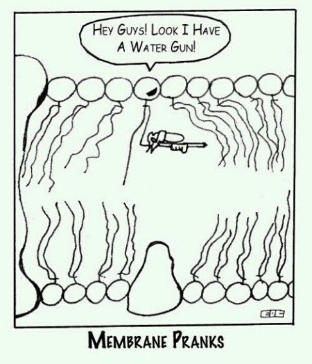 I am finding this way funnier than I should...water gun through a lipid bilayer...