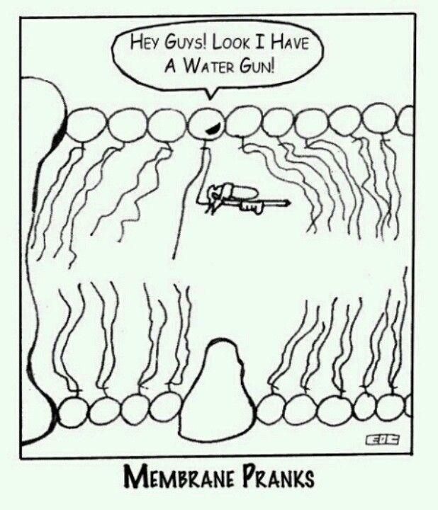 I am finding this way funnier than I should...water gun through a lipid bilayer...