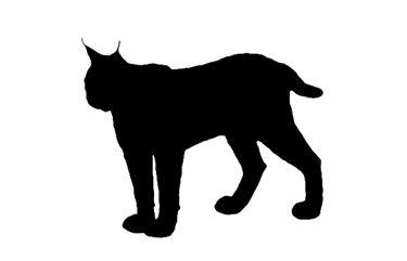 vector image lynx - Google-haku