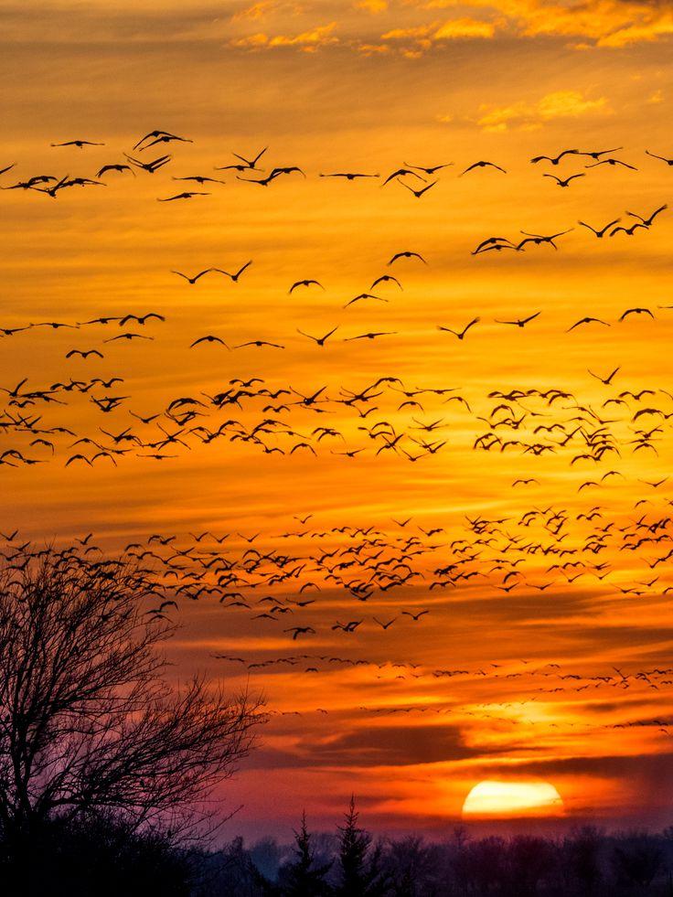 Sandhill Crane Migration in Kearney, Nebraska!