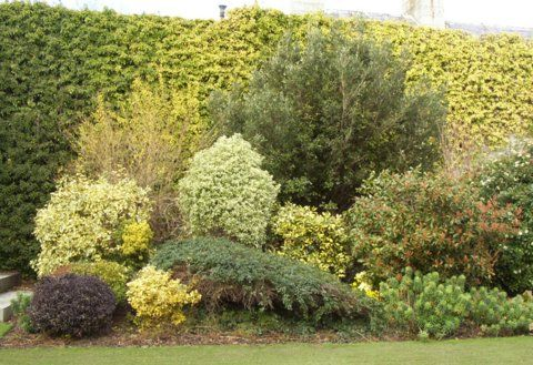 Ahhhhh shades of green art gardening for Garden trees england