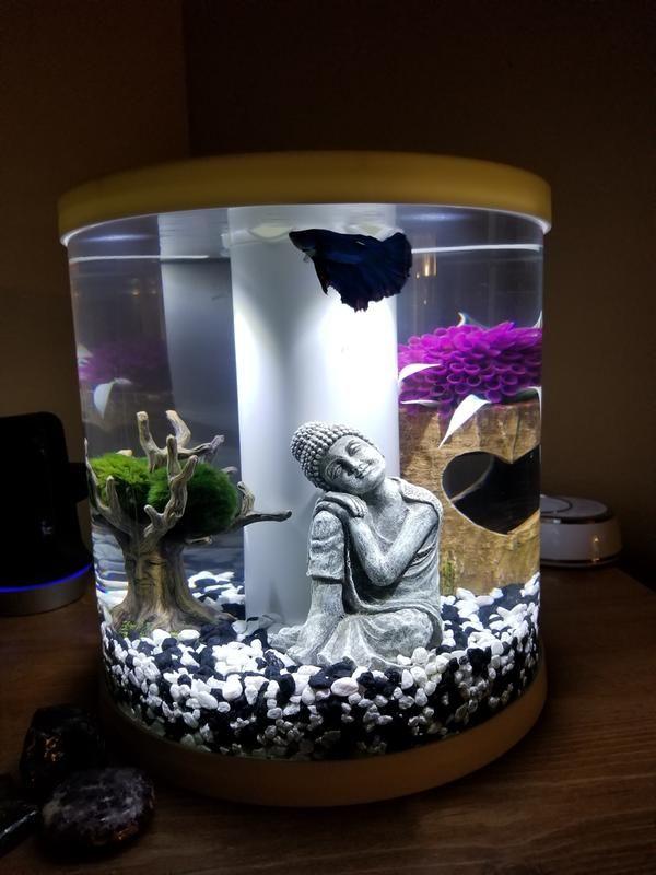 Pin On Fish Tank Ideas