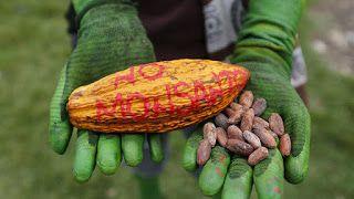 Salud Y Sucesos: Monsanto: Demandada Ante La CPI Por Crimenes Lesa ...