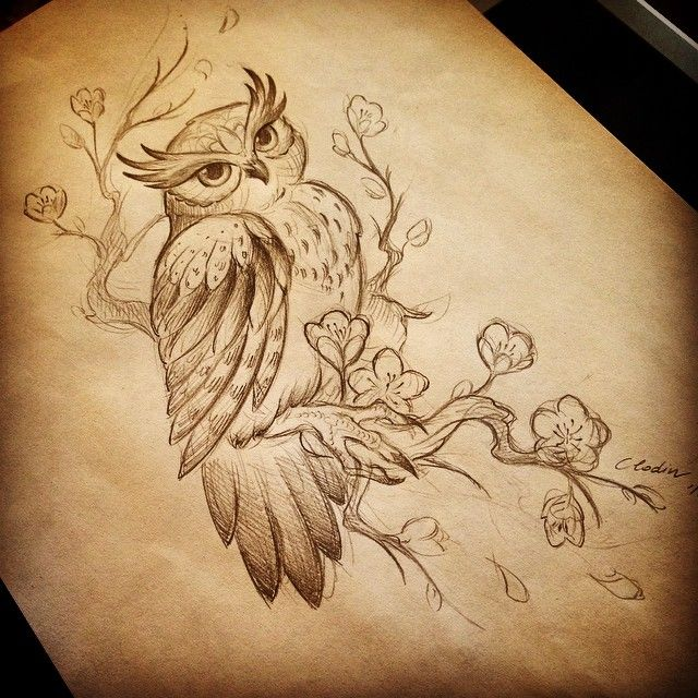 25 best ideas about owl drawings on pinterest owl