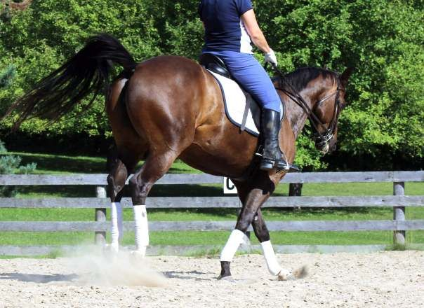 What To Do When Your Horse Is Being Naughty | Horse Listening