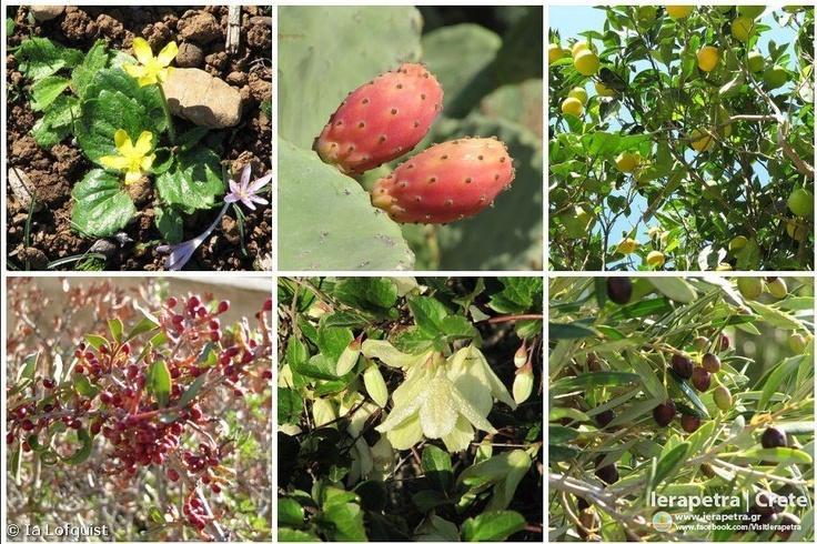 Nature offers small creatures...  Hiking Koutsounari - Aghios Jannis - Prophet Elias - Pano Chorio - Kato Chorio, Crete    Copyright: Ia Löfquist