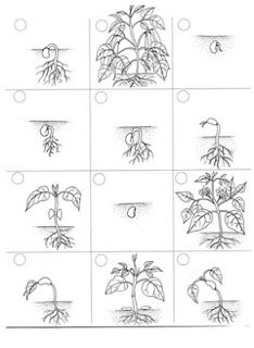 Juf Shanna: Cyclus van planten en dieren