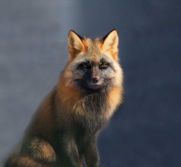 Mejores 80 imágenes de fox en Pinterest | Animales lindos, Animales ...