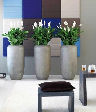 Luchtzuiverende kamerplanten   Chicplants Lepelplant mooi in hoge pot