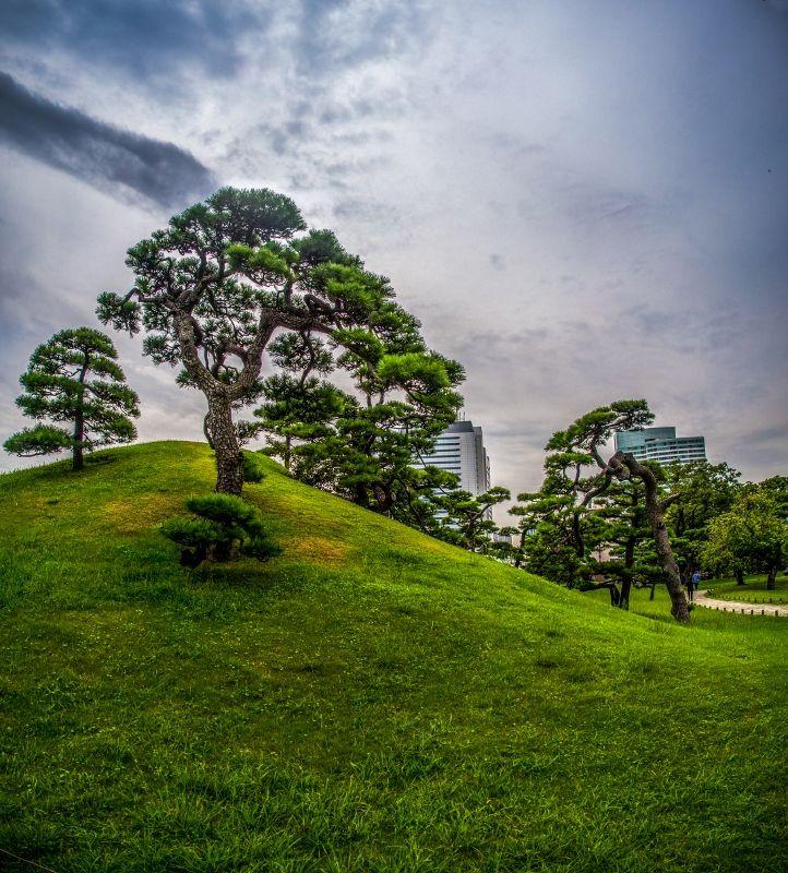 1000 id es sur le th me arbre japonais sur pinterest pivoines jardins japonais et jardinage. Black Bedroom Furniture Sets. Home Design Ideas