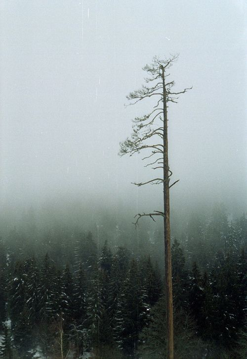 Stand Alone: Not, Random Pics, Good Home-Coming, Dead Trees, Death, Winter White, Posts, Random Stuff, Góngora Blog