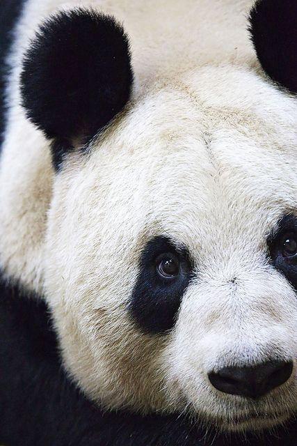 17 Best Ideas About Panda Eyes On Pinterest Eye Jumping