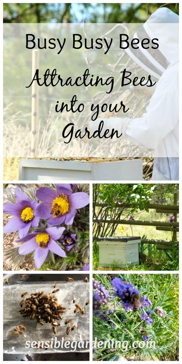 How Gardeners can help Bees with Sensible Gardening. Best bee plants.