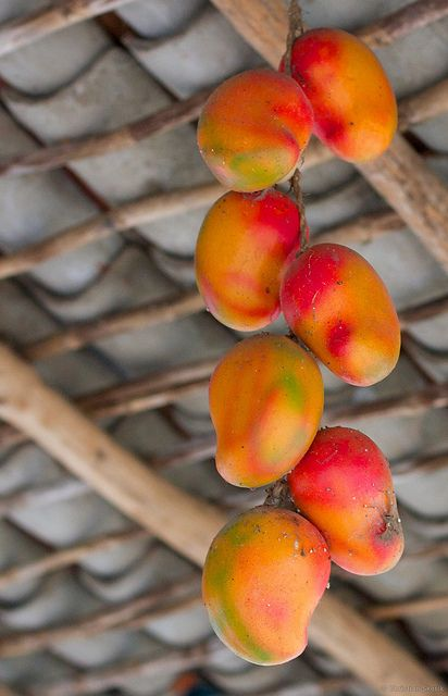 Christian Skorik ~ Mango