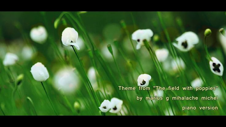 Song from The Field with Poppies  by MARIUS G MIHALACHE MICHEL